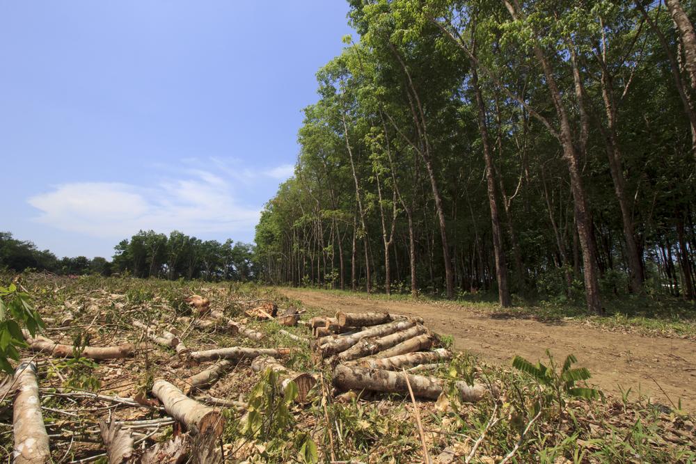 deforestation-huile-de-palme